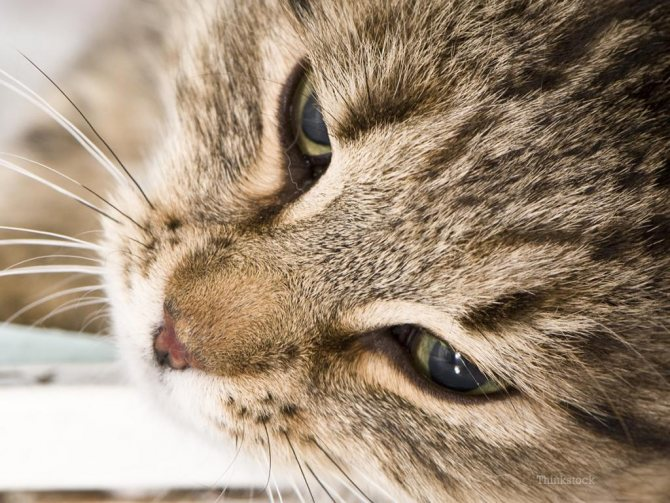 Рвота и понос с кровью у кошки