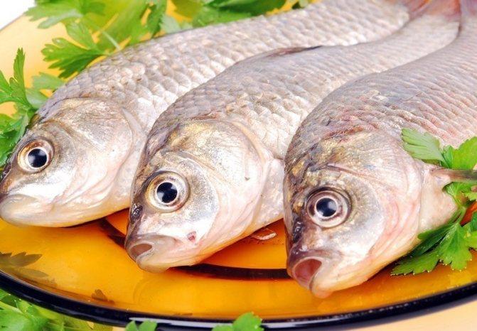 Рыба противопоказана кошкам
