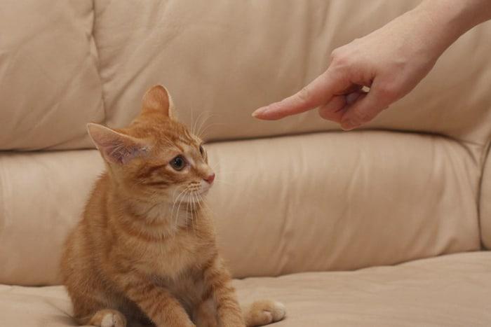 Рыжего котенка наказывают