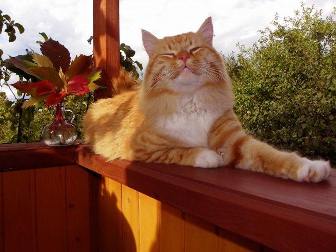 Рыжий кот лежит на улице