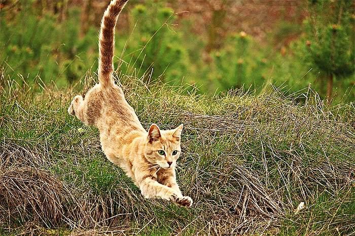 Рыжий котенок прыжок прыгает, фото фотография кошки