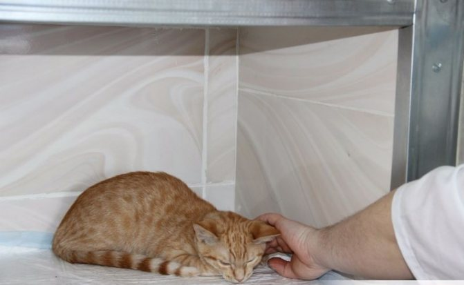 Рыжий котенок в коробке