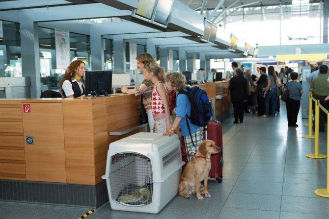 С котом в аэропорту