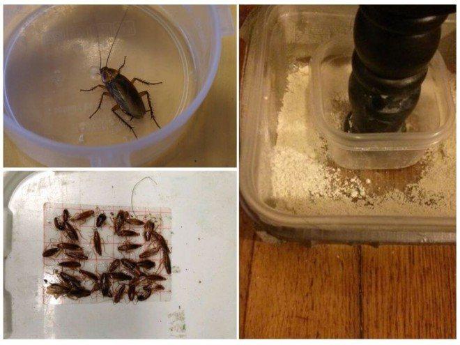 Самодельные ловушки от тараканов