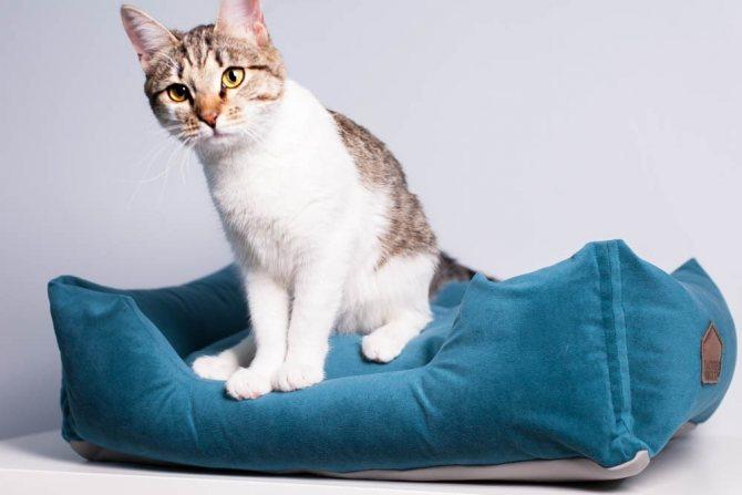 Самостоятельный осмотр кошки