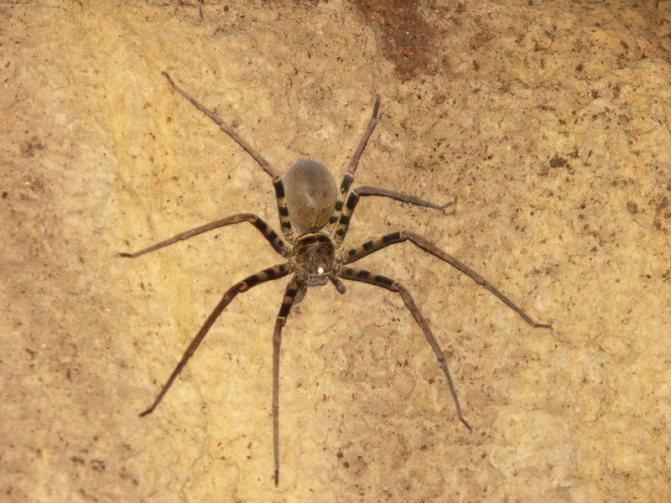 Самые большие пауки мира