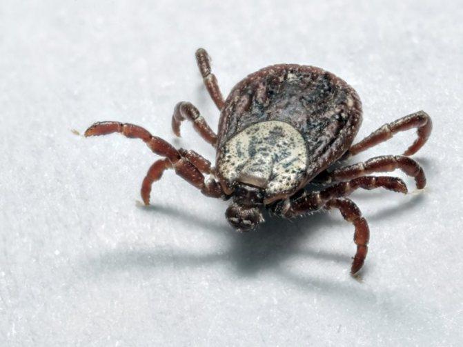 Самые опасные насекомые в мире: фото с названиями