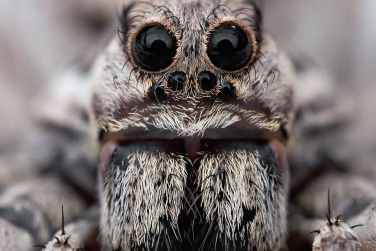 Самый большой тарантул: самый большой паук в мире, размеры гигантского тарантула
