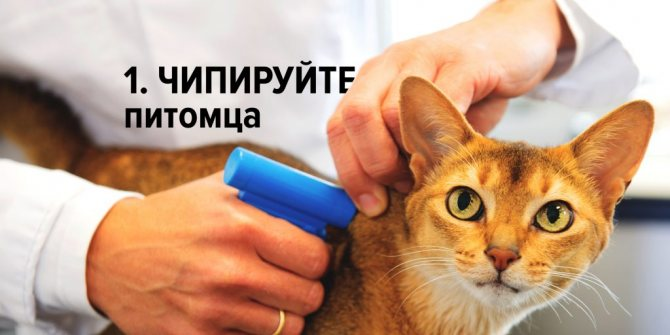 Сбежала кошка шаги для поиска потерявшегося питомца