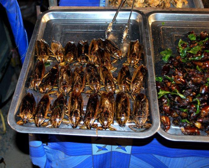 Съедобные насекомые Таиланда
