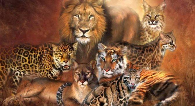 Семейство – кошачьи