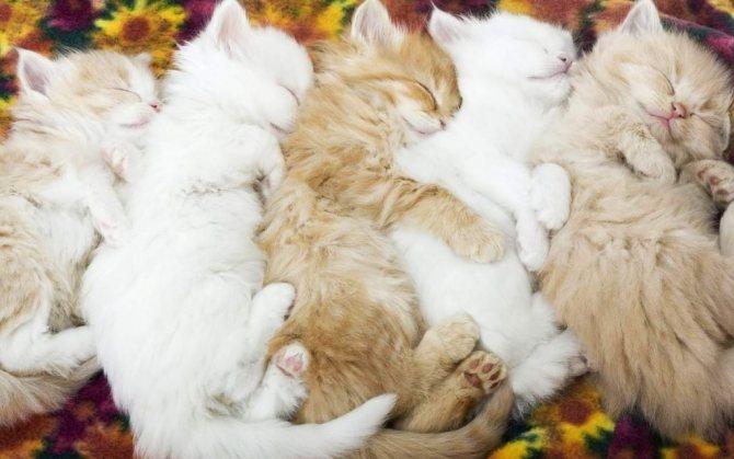Семейство кошек довольно большое и разнообразное.