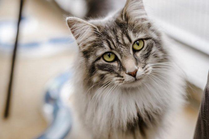 Серьезному коту - красивое имя