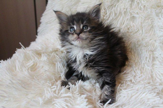 серый малыш на меховом одеяле