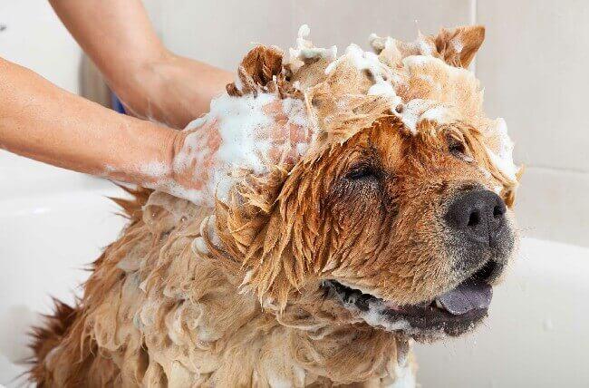 шампунь с хлоргексидином для собак