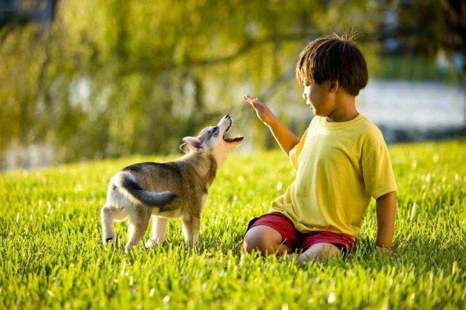 щенок играет с ребенком