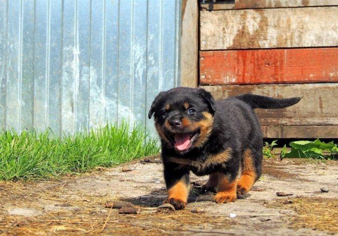щенок на новом месте жительства