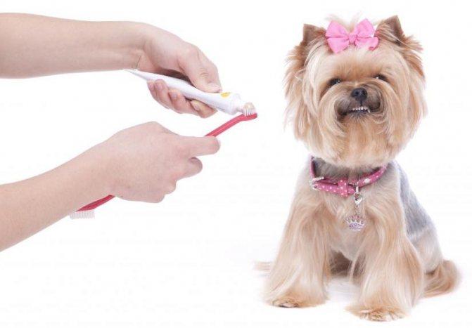 щетка для чистки зубов собакам