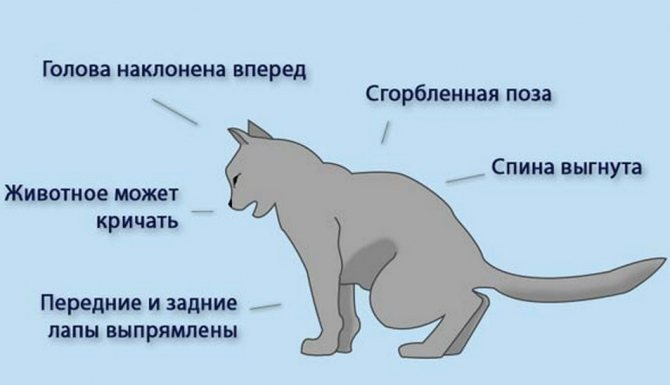 Схема позы кота