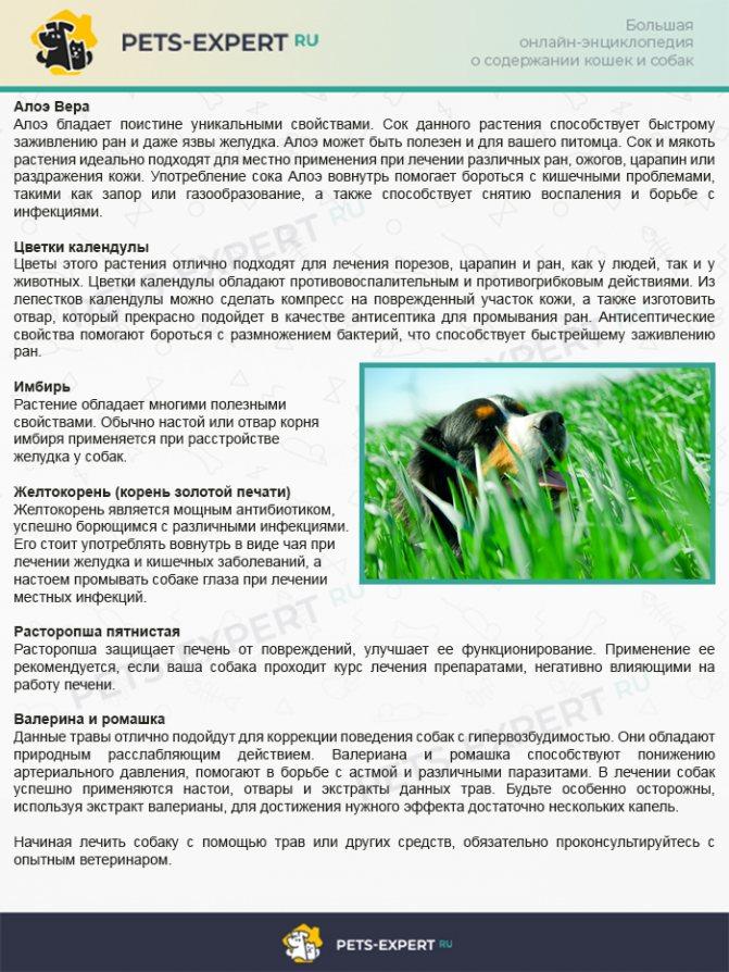 Шесть трав для улучшения состояния здоровья собаки