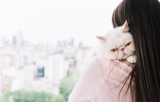 Шишки на животе у кошки
