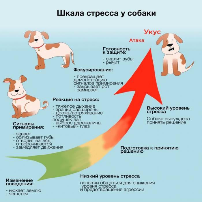 Шкала стресса у собаки