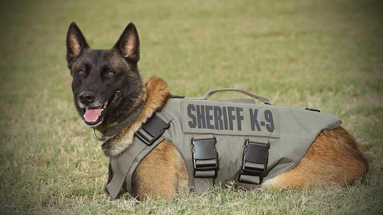 Шлейка для служебных собак