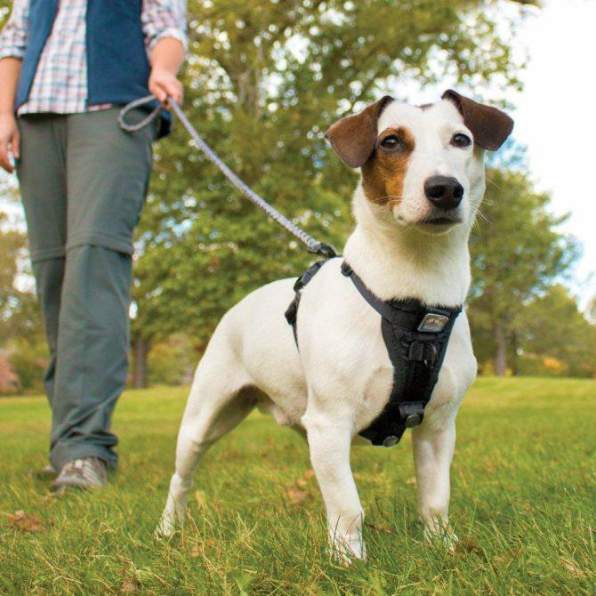 Шлейка для собак мелких пород