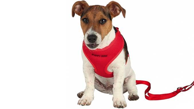 шлейка-жилетка для собаки фото