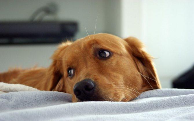Симптомы и первые признаки инсульта у собаки