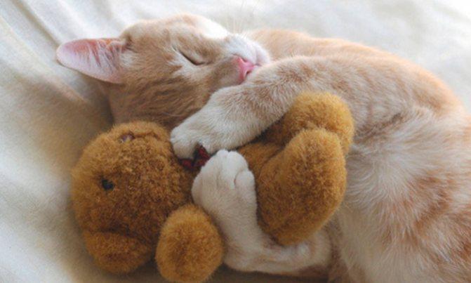 симптомы коронавируса у кошек