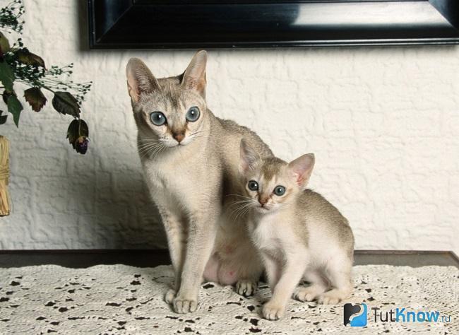 Сингапура с котёнком