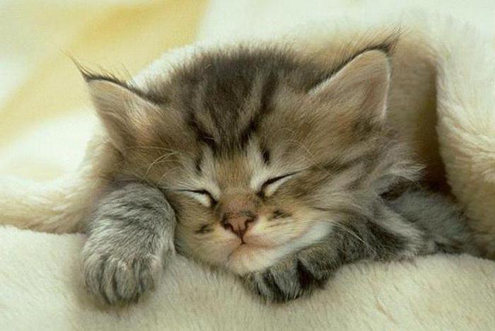 сколько кошки спят в сутки