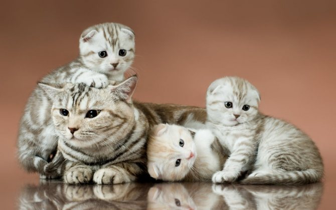 Сколько кошки вынашивают котят развитие детенышей и влияние породы на сроки беременности