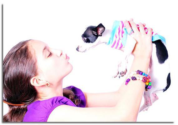Сколько лет живут собаки чихуахуа