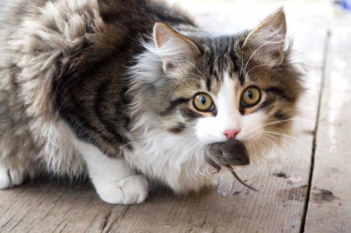 сколько может прожить кошка всю жизнь