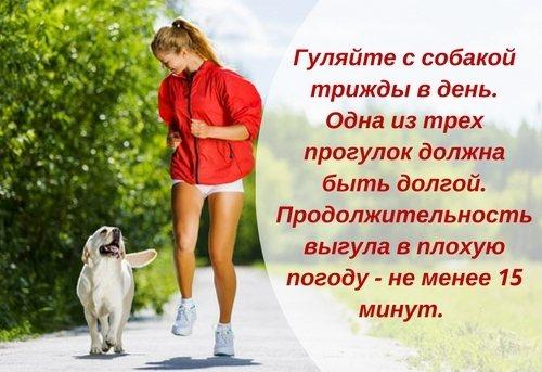 Сколько нужно гулять с собакой