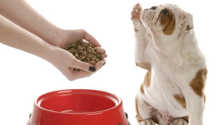 Сколько раз в день давать корм собаке