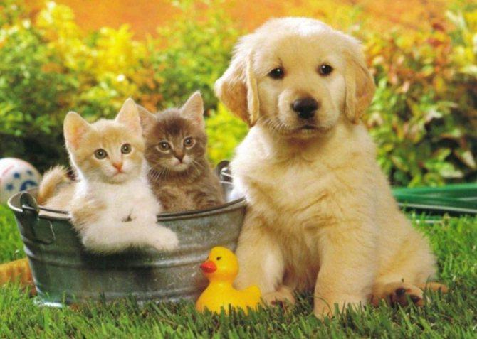 сколько ребер у собак и кошек
