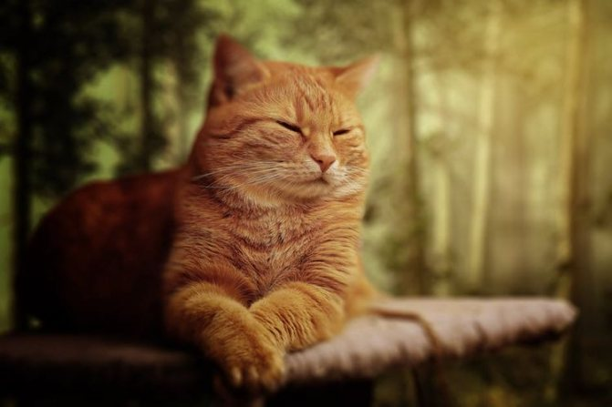 Сколько сосков у кошки и кота их строение и функции