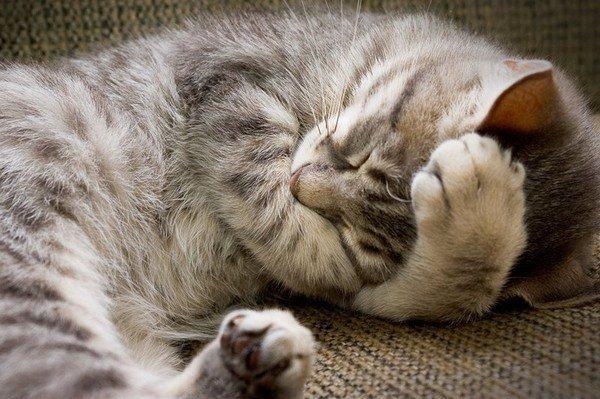 Сколько спят кошки в сутки?