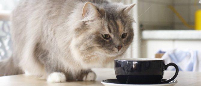 Сколько весит кот: таблица веса кошек по возрасту, норма и причины отклонения от нее