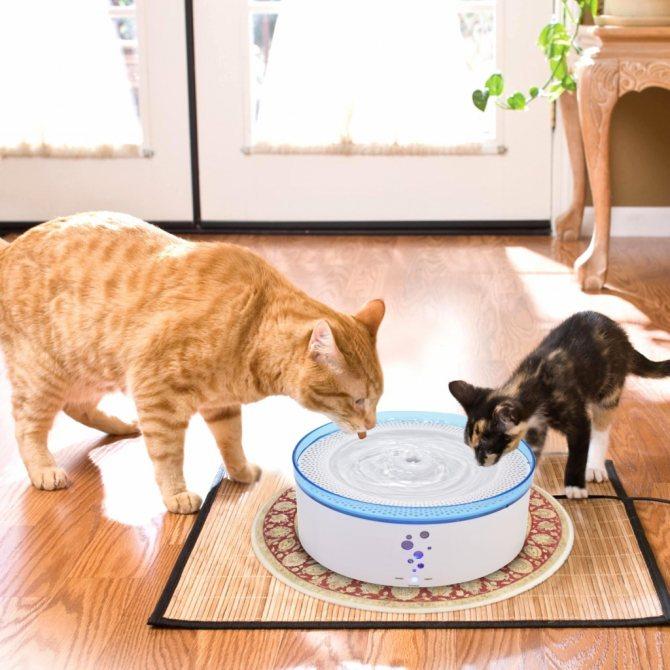 Сколько воды должна пить кошка в сутки в зависимости от телосложения