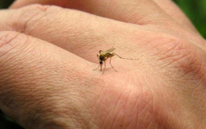 сколько живет комар обыкновенный