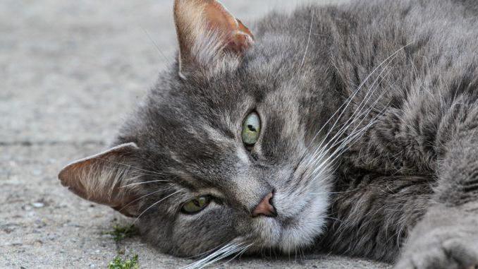 сколько жизней у кошки 7 или 9