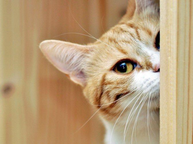Скучают ли кошки одни дома