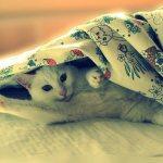 Скучают ли кошки по хозяевам 2