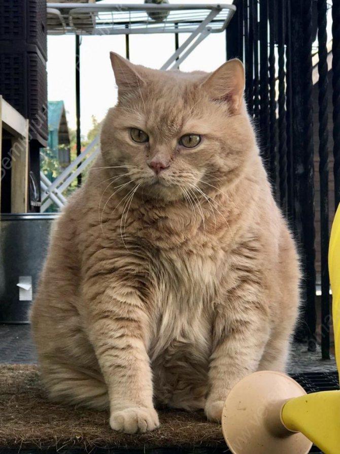 Следим за здоровьем котика