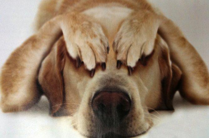 Собачий стресс