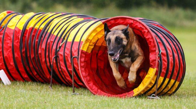 собачий туннель